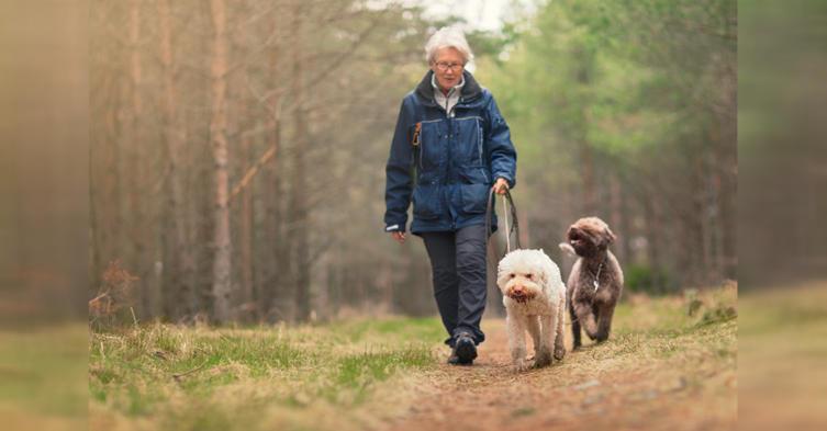 Zecken-Alarm! Wie ihr eure Hunde vor den kleinen Biestern schützen könnt