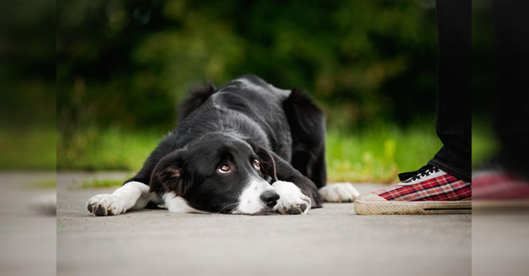 "Der ""schuldige Blick"" steckt eurem Hund in den Genen!"