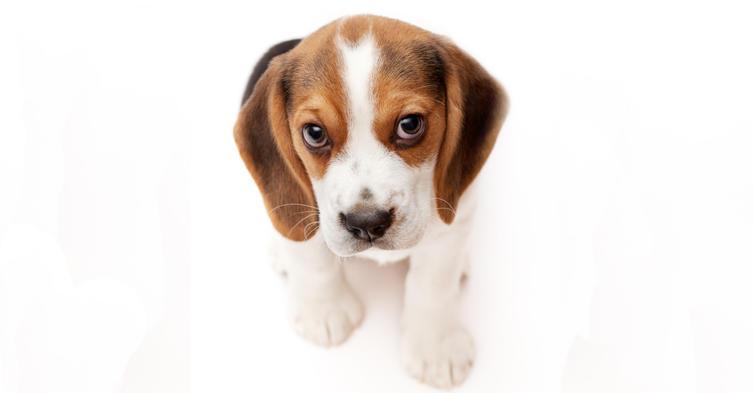 So manipuliert euch euer Hund, um zu bekommen, was er will