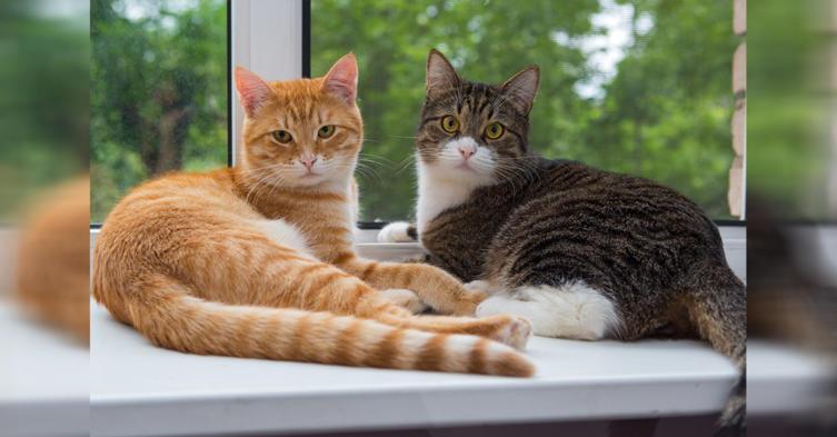 Das müsst ihr beachten, wenn ihr zwei Katzen haltet