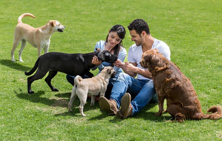 Adoptieren statt kaufen: Warum sich das Tierheim lohnt