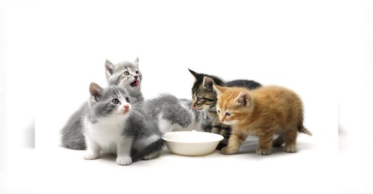 Worauf ihr bei der Ernährung für eure Katze achten solltet