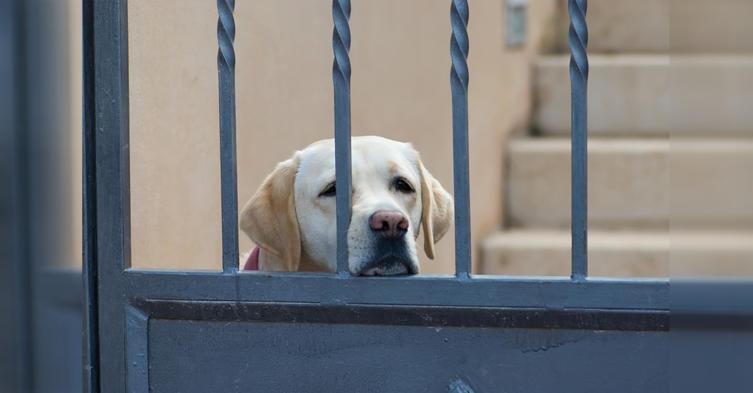 So verhindert ihr Trennungsangst bei Hunden