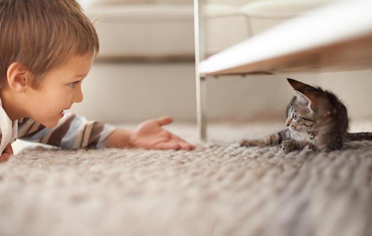 Hilfe, meine Katze pinkelt in die Wohnung – was soll ich tun?