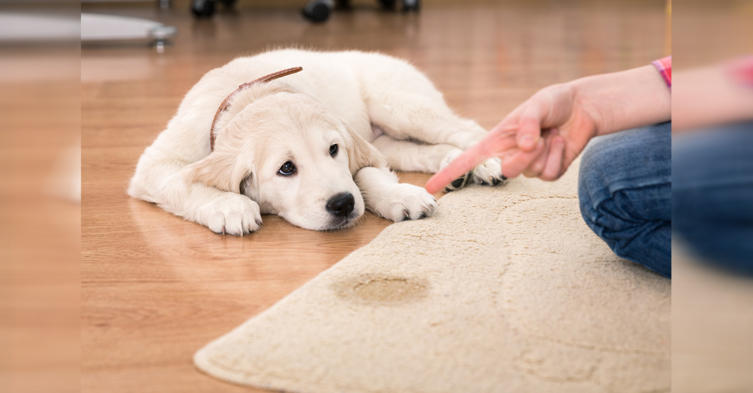 Wichtige Tipps: So bekommt ihr euren Hund stubenrein
