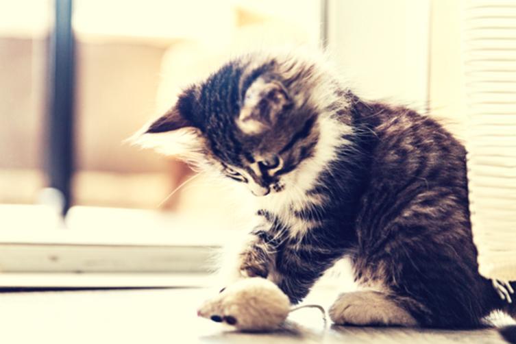 Erstausstattung für Katzen: 8 Dinge, die Dein Stubentiger braucht