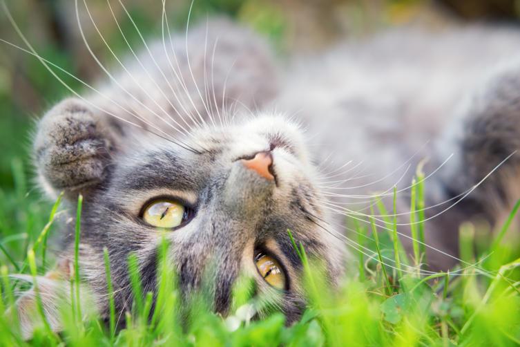 Katzen im Sommer: Das hilft dem Stubentiger bei Hitze