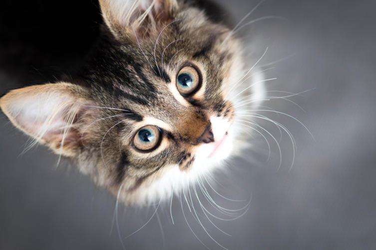 Katzen an der Körpersprache verstehen
