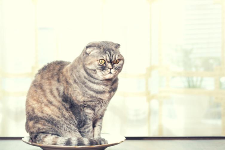 Katzenerziehung: Geht das überhaupt?