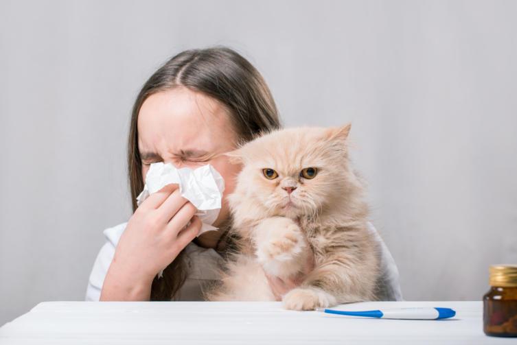 Katzenhaltung trotz Allergie – Was ist zu beachten?