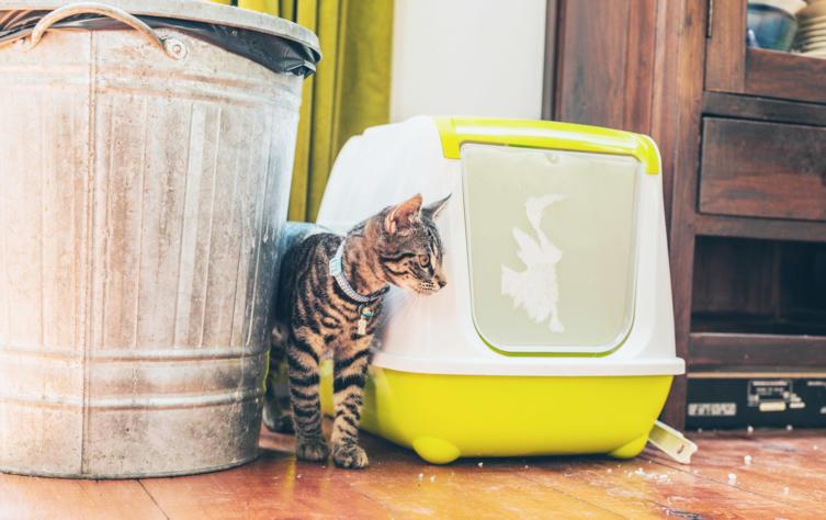 Katzenklo reinigen: Darauf solltest Du achten