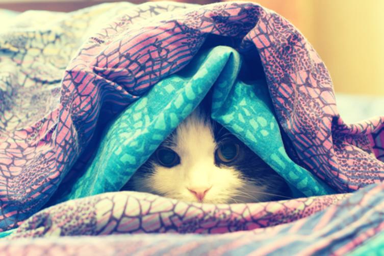 Katzenschnupfen: Worauf muss ich achten?