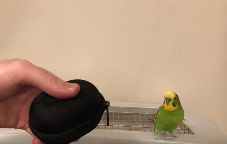 Dieser Vogel macht einen Reißverschluss perfekt nach!