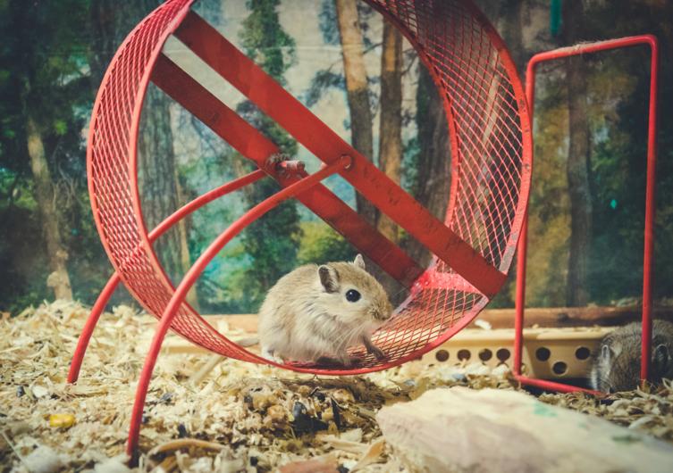 Kleintierkäfig: eine saubere Sache