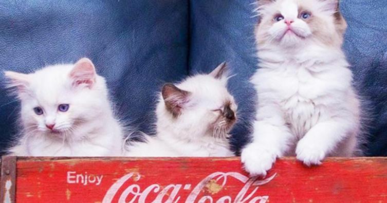 Das sind die 10 lustigsten Katzen-Schlafplätze in der Küche