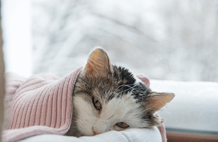 Meine Katze erbricht – Was muss ich tun?