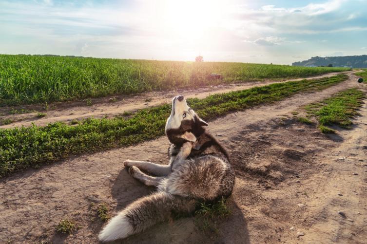 Milben beim Hund: Was tun?