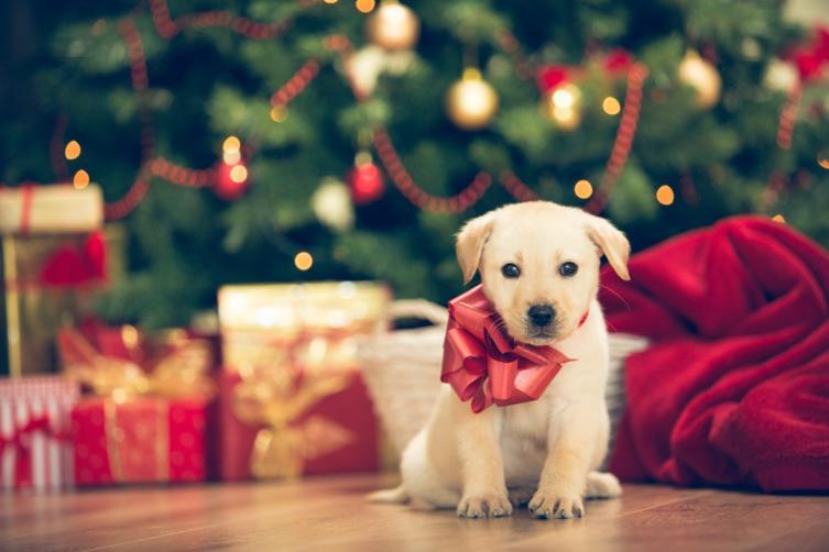 NoGo: Tiere als Weihnachtsgeschenk