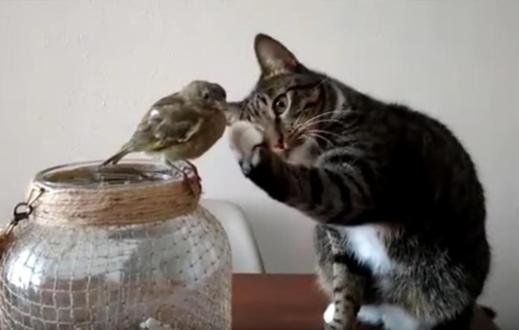 Unglaublich, aber wahr: Diese Katze streichelt einen Vogel