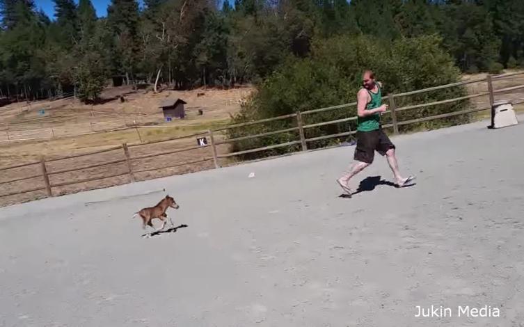 Es ist das kleinste Pferd der Welt – und es wird euch verfolgen