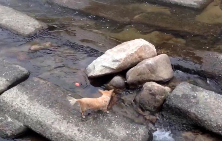 Dieser Hund hat einen genialen Weg gefunden, mit sich selbst zu spielen