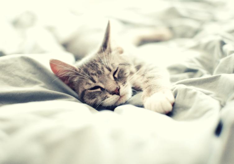 Schlafen – Das Lieblingshobby der Katze