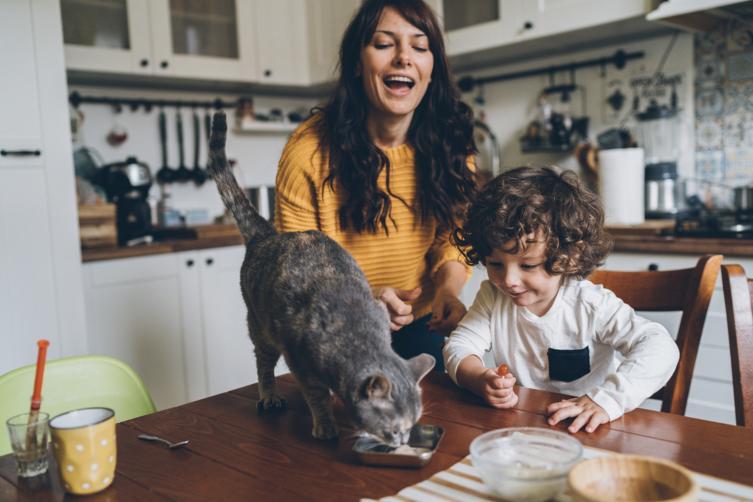 Sechs Todsünden bei der Katzenerziehung