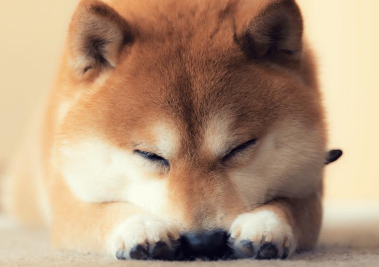 Shiba Inu: Rasseportrait