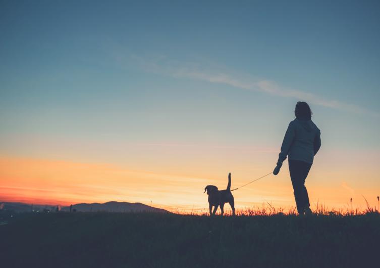 Sicher unterwegs im Dunkeln: Hundebeleuchtung im Herbst & Winter