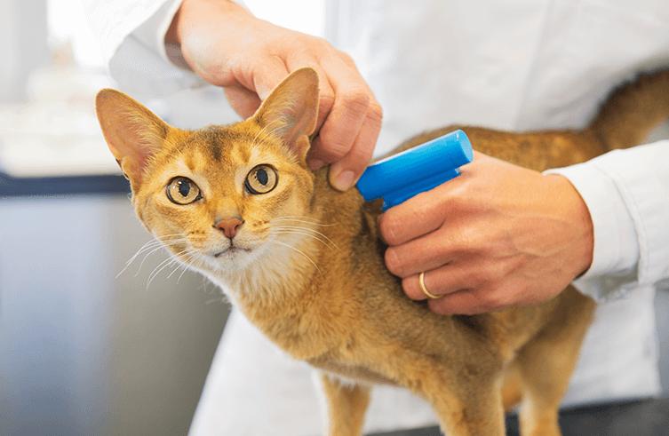 Soll ich meine Katze chippen lassen?