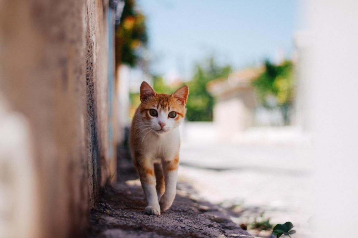 Auf Reisen mit der Katze – das müsst ihr beachten