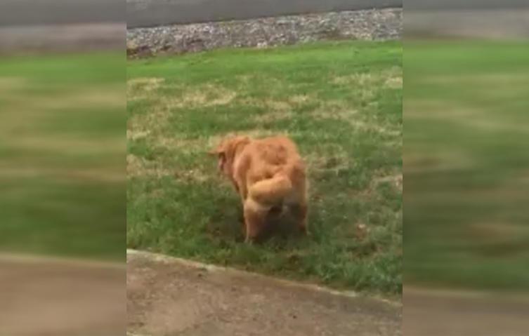 Sie ertappt ihren Hund auf frischer Tat – seine Reaktion ist genial