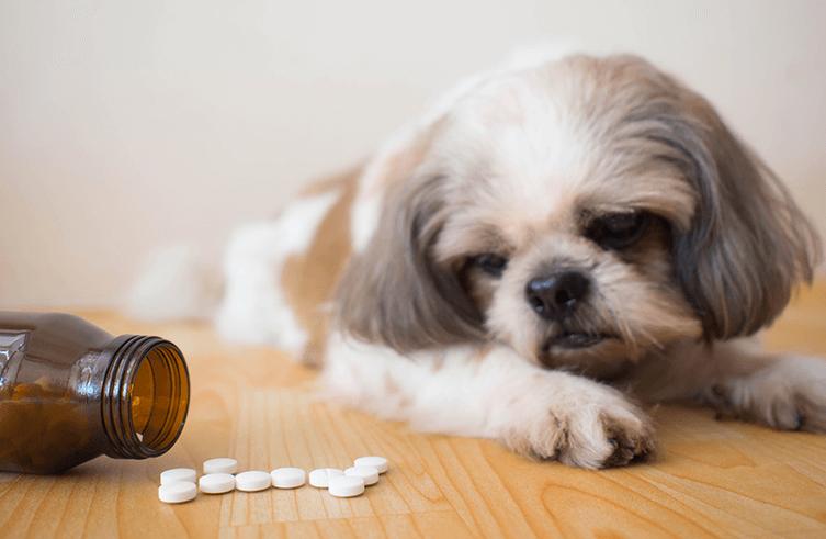 Übernimmt die Hundekrankenversicherung alternative Heilmethoden?