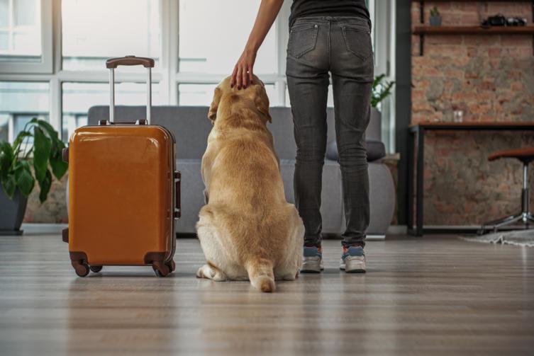 Urlaub mit Hund: Reisen auf 4 Pfoten – so geht's!