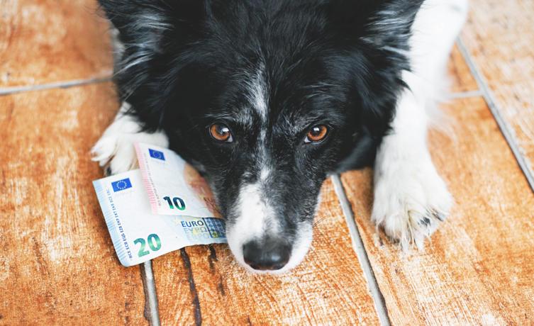 Was kostet ein Hund im Monat?