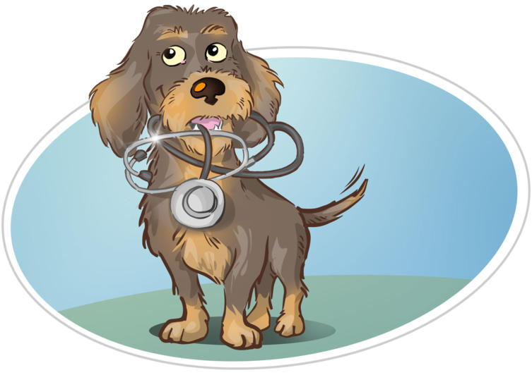 Wasti beim Tierarzt: Diesmal bin ich tapfer!