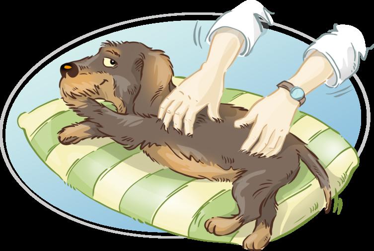 Wastis Welt: Neulich im Hundewellness-Salon