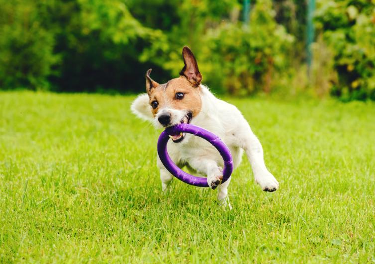 Welche Hundesportarten gibt es?