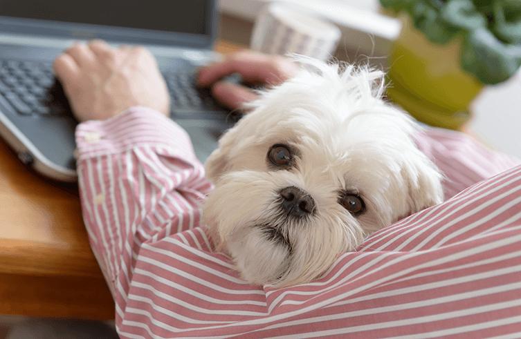 Welche Leistungen bietet eine gute Hundekrankenversicherung?