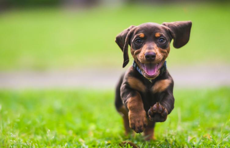 Welche Versicherungen braucht mein Hund?