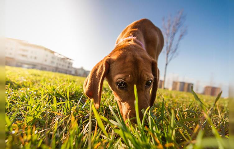 Wie nimmt ein Hund die Welt wahr?