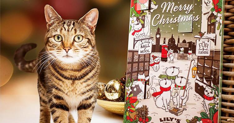 Das sind die 5 schönsten Adventskalender für Katzen