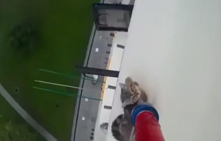 Schwindelerregend: Katze aus dem 12ten Stock gerettet!