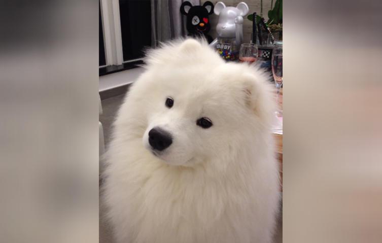 Dieser flauschige Hund hat eine Angewohnheit, die viele Hundebesitzer kennen dürften