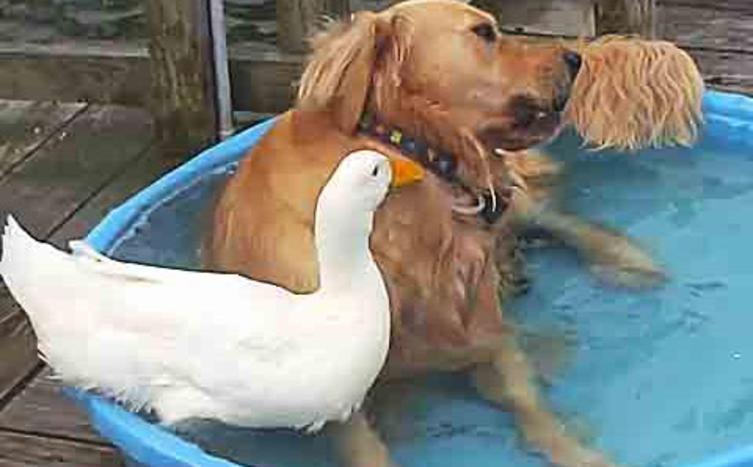 Ich bin ein Hund und mein bester Freund ist eine Ente.