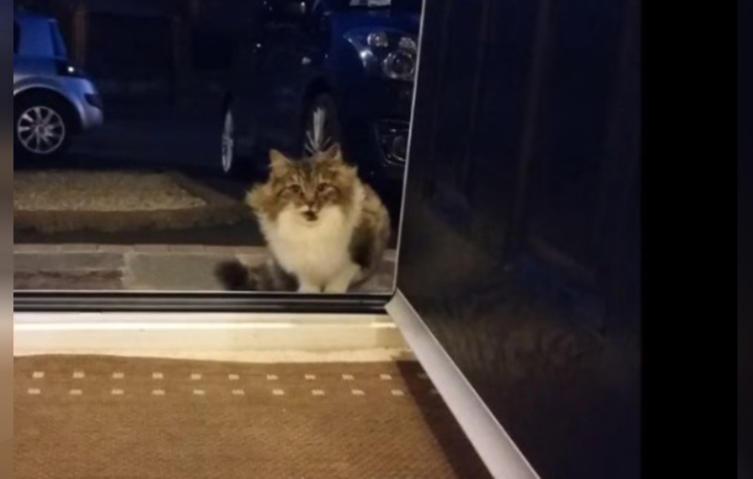 Streunende Katze bittet verzweifelt darum, ins Haus zu dürfen – aus gutem Grund