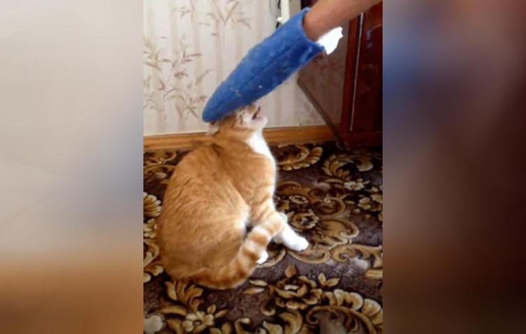 Jugendlicher ärgert seine Katze und bekommt, was er verdient