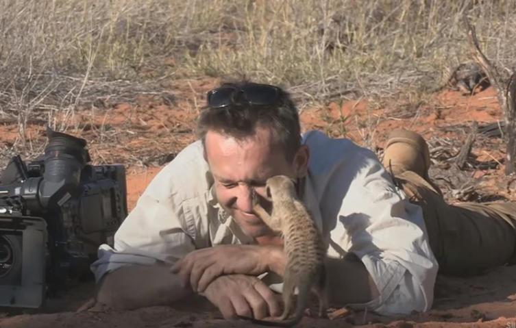 Dreist: Erdmännchen benutzen Kameramann als Aussichtsturm