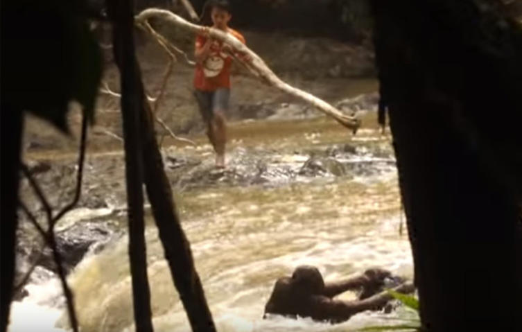 Rührendes Video: Orang-Utan wird aus reißendem Fluss gerettet