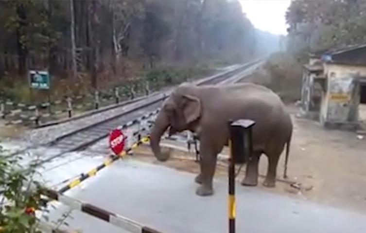 Das passiert, wenn ein Elefant auf eine Bahnschranke trifft